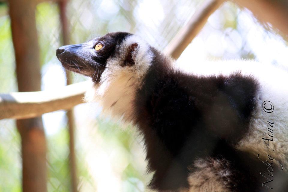 Nicky Aina - EEN Madagascar